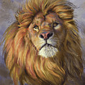 African Lion by Lucie Bilodeau