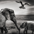 African Playground by Christine Sponchia