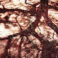 African Shadow Tree Nr 3 by Menega Sabidussi