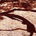 African Shadow Tree Nr 6 by Menega Sabidussi