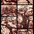 African Shadow Trees by Menega Sabidussi