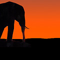 African Sunset by Joe Costello