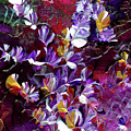 African Violet Awake #4 by Nan Bilden
