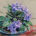 African Violet by Donald Maier