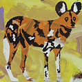 African Wild Dog by Candace Shrope
