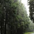 After Rain by MingTa Li