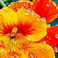 After The Rain Color by Joy Newman