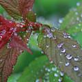 After The Rain by Debra Straub