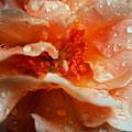 After The Rain by Lori Tambakis