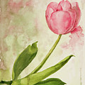 After The Rain  Tulip 2 by Kathryn Donatelli