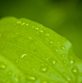 After The Rainfall 2 by R J Ruppenthal