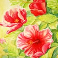 Afternoon Hibiscus by Inese Poga