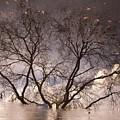 Afternoon Reflection by Derek Selander