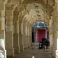 Afternoon Siesta by Aashish Vaidya