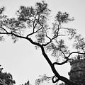 Afternoon Thien Mu Pagoda by Tran Minh Quan