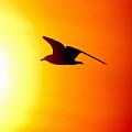 Against The Sun by Jouko Lehto