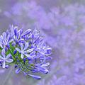 Agapantha Lilac Pastel By Kaye Menner by Kaye Menner