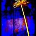 Agapanthus Digital Glory by VIVA Anderson