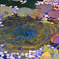 Agape Gardens Autumn Waterfeature by Anastasia Savage Ealy