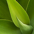 Agave by Heiko Koehrer-Wagner