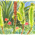 Agave In Bloom by Judith Kunzle