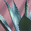 Agave by Inter Mari