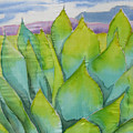 Agave by Kathy Mitchell