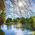 Agua Caliente by Larry White