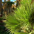 Agua Caliente Park by Teresa Stallings