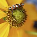 Ailanthus Webworm Moth #5 by Karen Adams