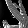 Ain't No Saguaro In Texas by Christine Till
