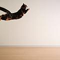 Airborne Cat by Junku
