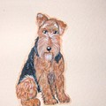 Airedale Terrier by Tammy Brown