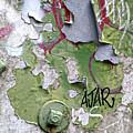 Ajar by Dan Reich