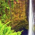 Akaka Falls by Christopher Johnson