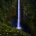 Akaka Falls by James Roemmling