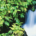 Akaka Falls State Park by Ron Dahlquist - Printscapes