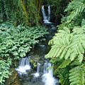 Akaka Falls Stream by Greg Vaughn - Printscapes