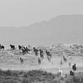 Akhal-teke Herd #2 by Artur Baboev