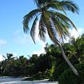 Akumal Sur Beach 1 by Christopher Spicer