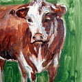 Alabama Cow by Lia  Marsman