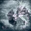 Alabaster Petals by Bellesouth Studio