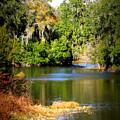 Alafia River by Carol Groenen