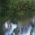 Alafia River Reflection by Susan Jenkins