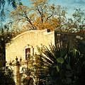 Alamo Mission by Iris Greenwell