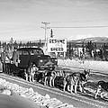 Alaska: Dog Sled, C1950 by Granger
