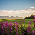 Alaska Summer Love by Tami Biorn