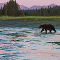 Alaska Sunrise Bear  by Chris Scroggins