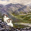 Alaskan  Dalls Sheep by Lynne Parker