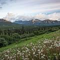 Alaskan Dandelions  by Travis Elder